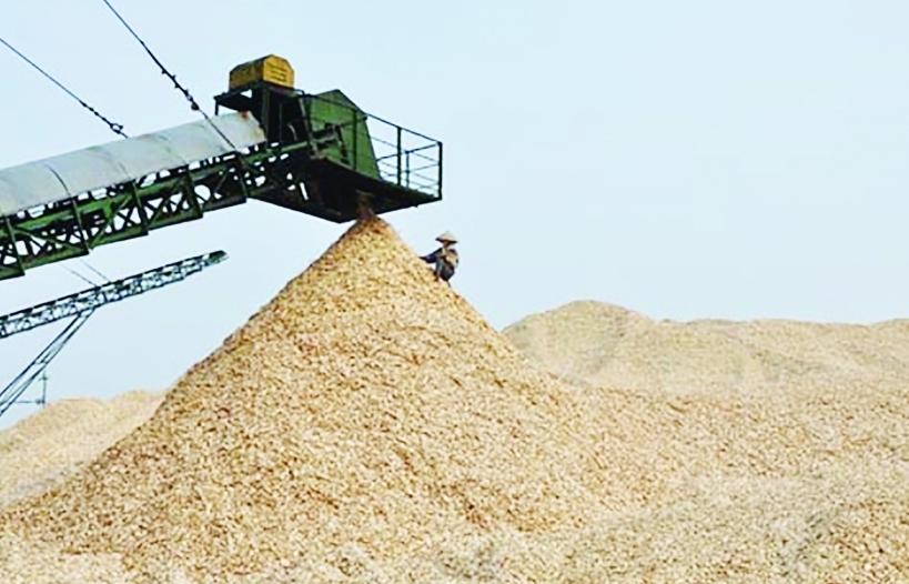 Hướng xuất khẩu dăm gỗ bền vững
