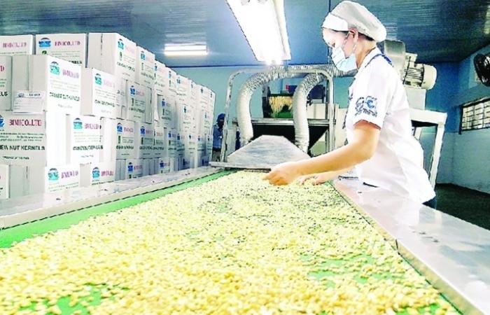 Xuất khẩu hạt điều dự báo khởi sắc tại EU, Mỹ