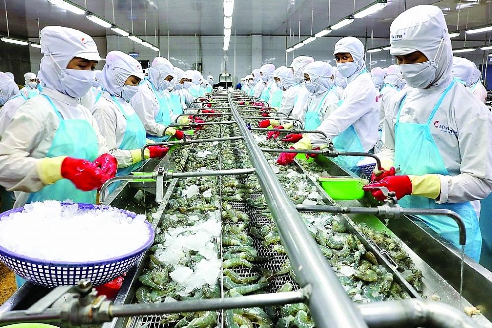 Chế biến tôm xuất khẩu tại Công ty CP Tập đoàn thủy sản Minh Phú. Ảnh: ST
