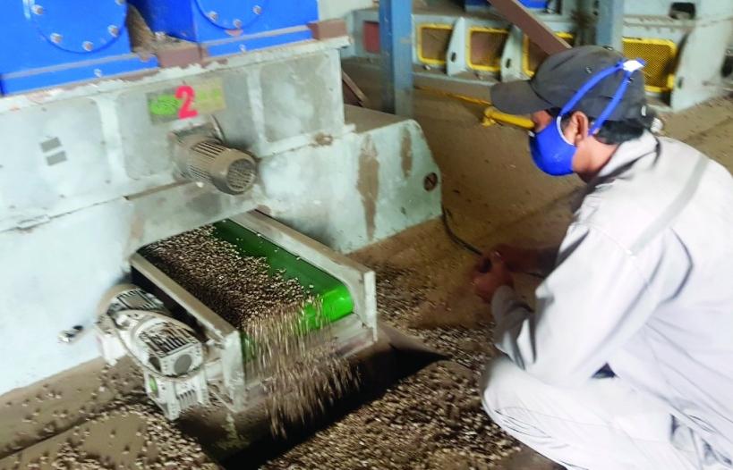 Xuất khẩu viên nén từ mùn cưa, dăm bào vẫn thu về hàng trăm triệu USD