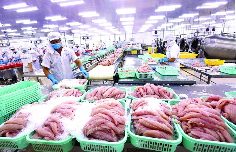 Chế biến cá tra xuất khẩu tại Công ty Cổ phần xuất nhập khẩu thủy sản Cần Thơ.  Ảnh: TTXVN