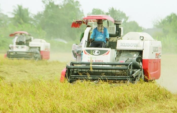 Gạo Việt Nam xuất khẩu lập kỷ lục trên 1.000 USD/tấn