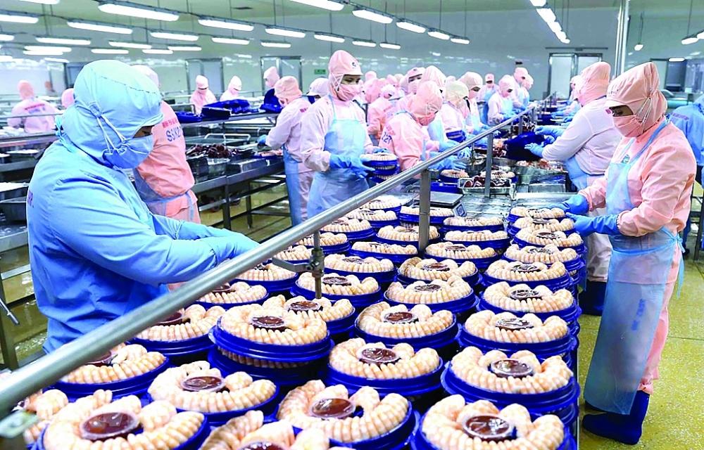 Chế biến tôm xuất khẩu tại nhà máy của Tập đoàn Minh Phú Seafood Corp tại Khu công nghiệp Nam Sông Hậu (Hậu Giang). Ảnh: TTXVN