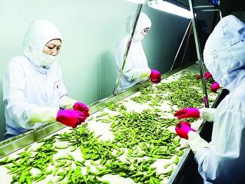 """Thực hiện CPTPP và EVFTA: Nông sản Việt vượt rào cản kỹ thuật  để chiếm lĩnh """"chợ"""" thế giới"""