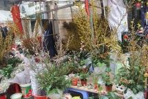 thi truong hoa tet cac cua hang len ke hoach nhap hoa som