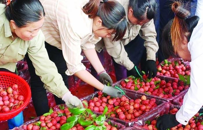 Nông sản xuất sang Trung Quốc -chính ngạch để vững bền
