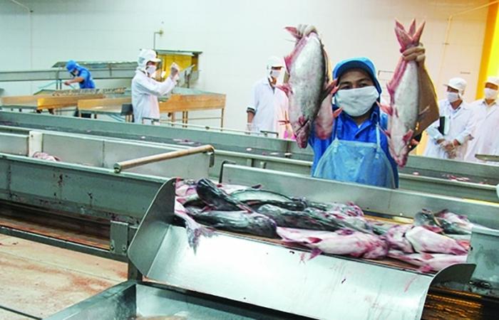 Cá tra, cá lóc, cá trê, cá bớp Việt Nam lại thoải mái vào Campuchia