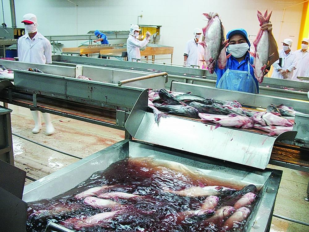 Xuất khẩu cá tra dự báo có nhiều khởi sắc trong năm 2021. Ảnh: N.Thanh