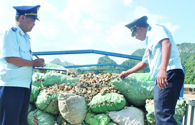 Giá ngô Trung Quốc tăng, sắn Việt thêm cơ hội xuất khẩu