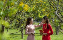 Teen Huế thích thú chụp ảnh vườn mai vàng đón Tết