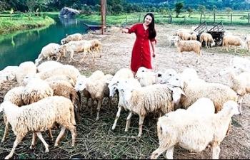 Đồng cừu Suối Tiên: Thêm điểm du lịch ở Cam Ranh