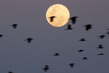 """Ngắm """"vườn chim"""" Phan Thiết"""