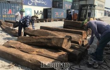 """Doanh nghiệp """"ma"""" nhập lậu  50 container gỗ quý?"""