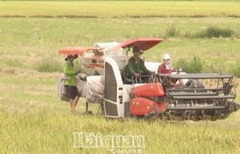 Đơn hàng tới tấp, xuất khẩu gạo tăng trưởng đột phá