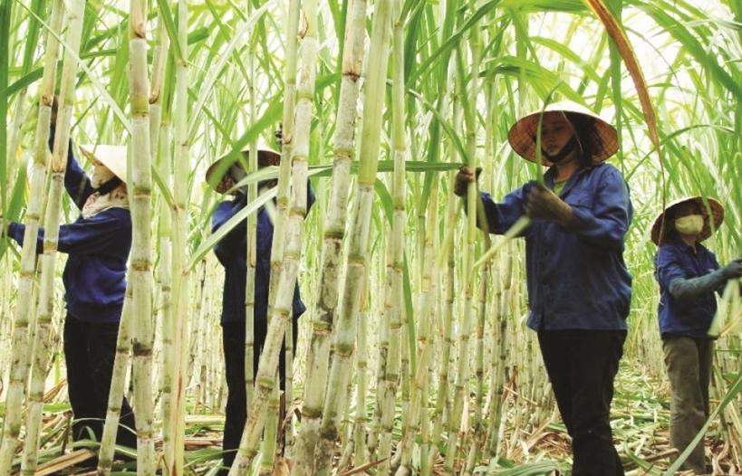 Áp thuế đường Thái, đường Việt vẫn thấp thỏm lo nhập lậu