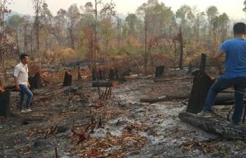 Gia Lai kỷ luật 2 tập thể và 18 cá nhân để mất rừng