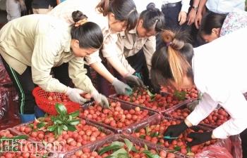 Xuất khẩu rau quả:  Khởi sắc xen lẫn âu lo