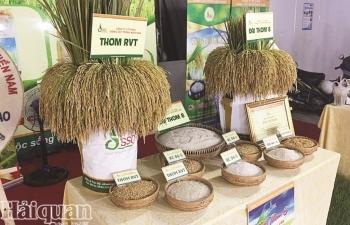 Bấp bênh gạo xuất khẩu