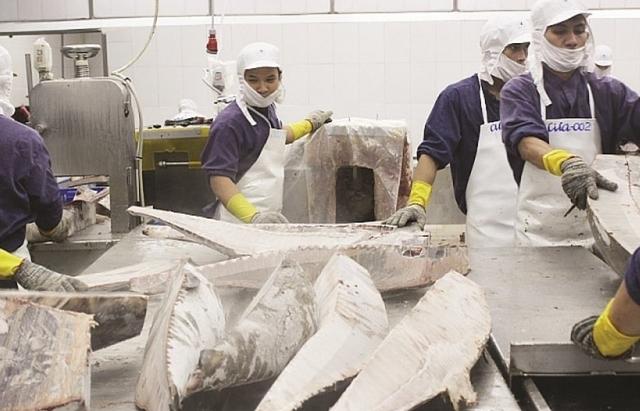 Xuất khẩu cá ngừ sang Đức đảo chiều, tăng đột biến