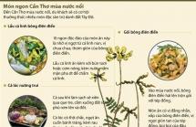infographics thuong thuc mon ngon can tho mua nuoc noi