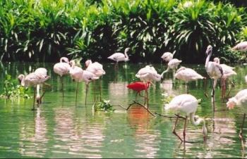 Vườn chim Bạc Liêu - Khu bảo tồn thiên nhiên quốc gia và điểm tham quan hấp dẫn