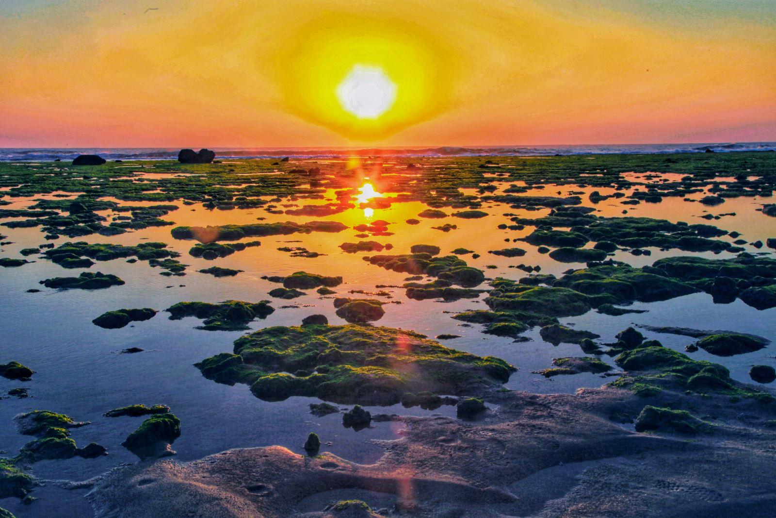 Ngất ngây giữa rừng san hô Ninh Thuận