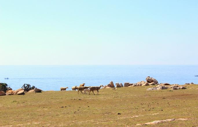 Han Sara cũng đã đếm cừu rồi, chỉ còn đợi bạn nữa thôi!