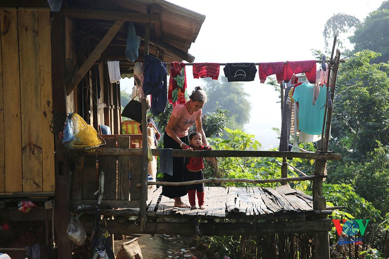 vung cao yen bai vao mua vang mua dep nhat trong nam
