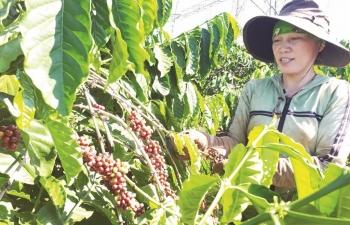 """Xuất khẩu cà phê:  Lượng """"về nhì"""", giá"""