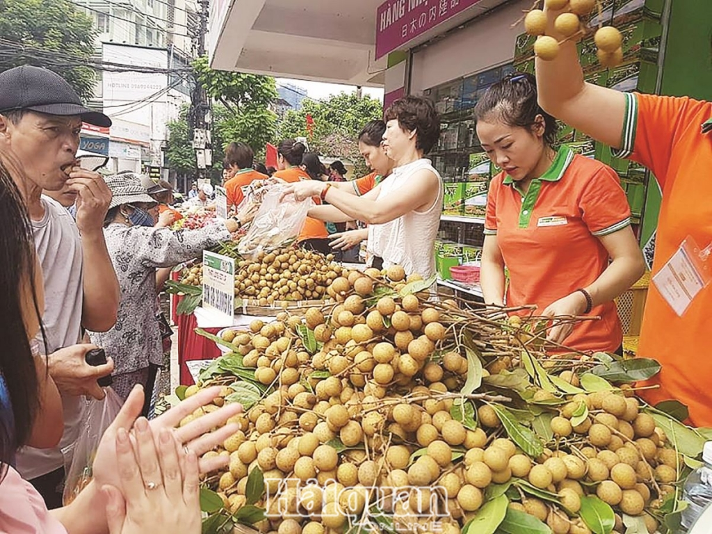 hang hut xuat khau rau qua 113116