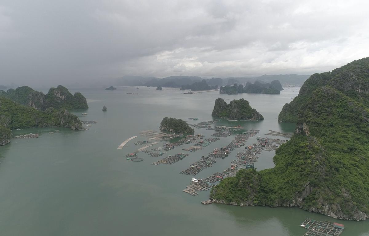 Toàn cảnh làng chài trên vịnh Bái Tử Long. (Ảnh: Lâm Phan/Vietnam+)