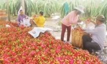 """Xuất nông sản sang Trung Quốc:  Đừng xuất bằng xe """"cút kít"""""""