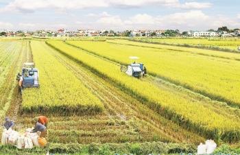 Tích tụ đất nông nghiệp:  Doanh nghiệp và nông dân đều vướng