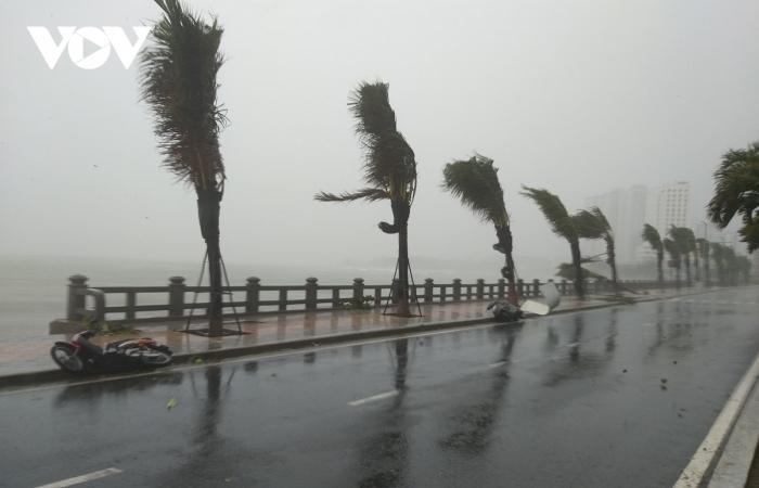 Bão số 12 đổ bộ vào Khánh Hòa, Phú Yên gây mưa lớn, nhiều cây xanh gãy đổ