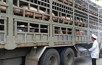 Ban Chỉ đạo 389 yêu cầu cấp bách phòng ngừa, ngăn chăn dịch tả lợn châu Phi