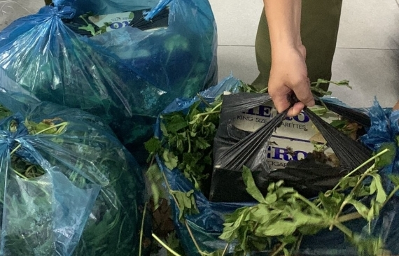 Dùng rau ngụy trang để vận chuyển thuốc lá lậu