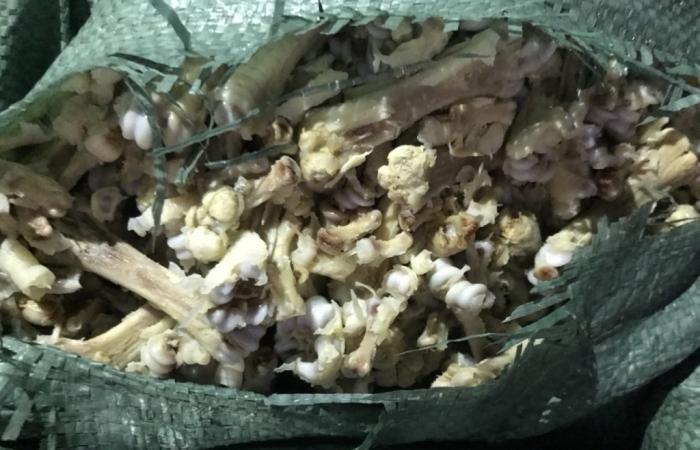 Quảng Ninh: Chặn đứng 6,5 tấn xương chân gà, lòng lợn