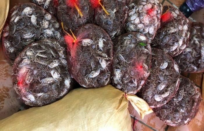 Hải quan Quảng Ninh bắt giữ 110 kg thực phẩm tươi sống nhập lậu