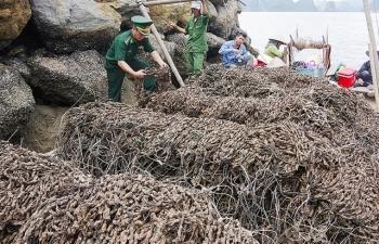 Dùng biển kiểm soát giả chở 30.000 dây hàu giống chưa rõ nguồn gốc