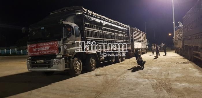 Lô lợn thịt thứ hai nhập khẩu qua cửa khẩu Lao Bảo