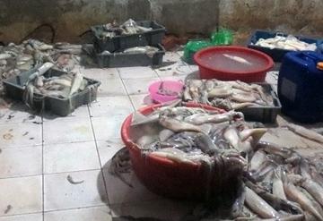 Quảng Ninh: Ngăn buôn lậu, vận chuyển trái phép động vật thủy sản