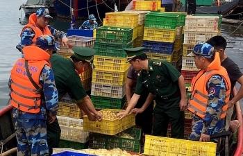 Quảng Ninh: Thu giữ 35.000 con vịt giống không rõ nguồn gốc
