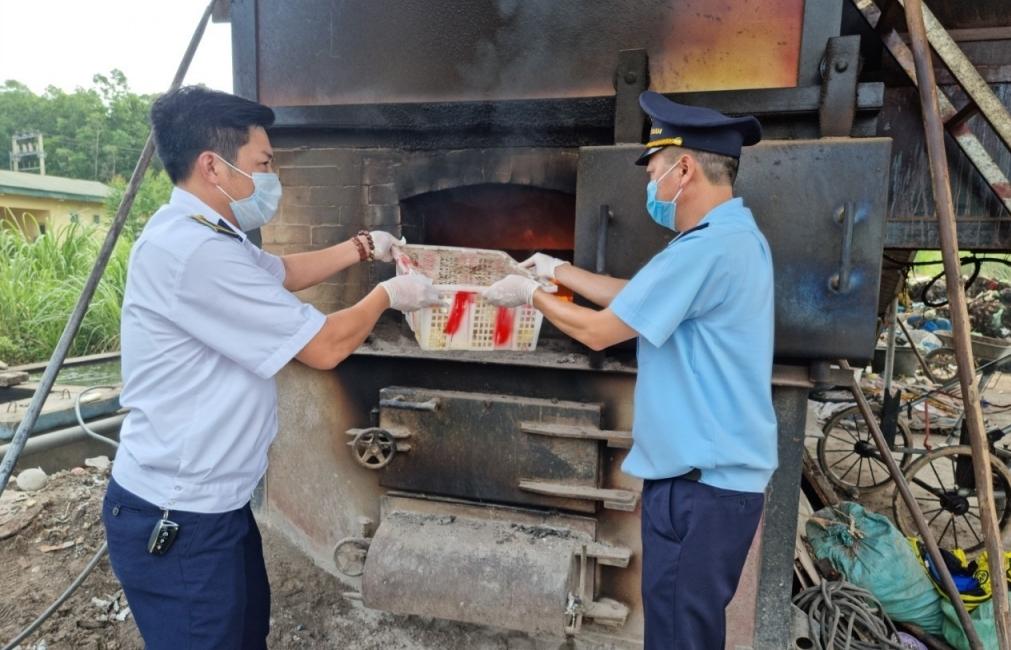 Hải quan Hoành Mô liên tiếp bắt giữ 2.200 con vịt giống nhập lậu