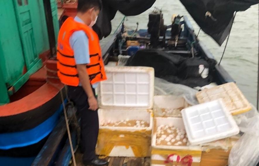 Hải quan Vạn Gia bắt giữ 13.000 quả trứng gia cầm nhập lậu