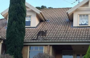 Du khách cười mệt vì những điều hài hước chỉ có ở xứ sở kangaroo
