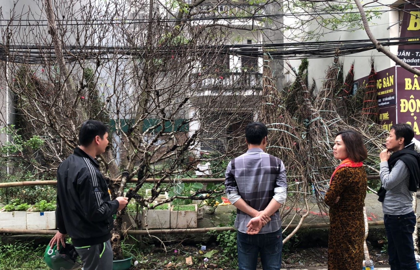 Đào rừng ngập tràn Thủ đô, giá tiền triệu mỗi cành