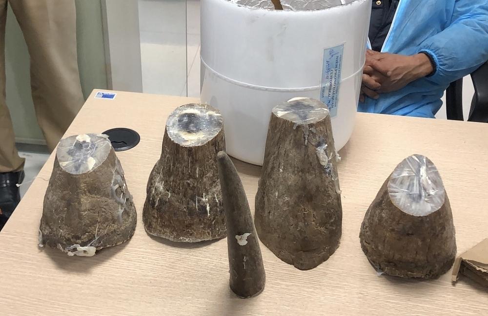 Tang vật 5 mẫu vật sừng tê giác. Ảnh do Chi cục Hải quan cửa khẩu cảng Cẩm Phả cung cấp.