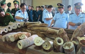 Hải quan Việt Nam phát hiện nhiều vụ vi phạm Công ước CITES có quy mô lớn