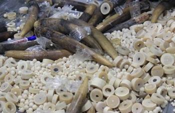 Hải quan Nội Bài phát hiện nhiều sản phẩm nghi chế tác từ ngà voi