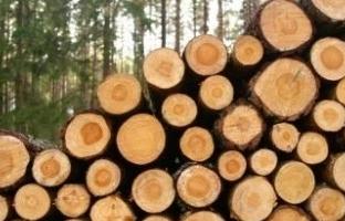 Hướng dẫn về nộp bảng kê khai nguồn gốc gỗ nhập khẩu